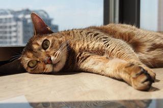 連休中の猫さん