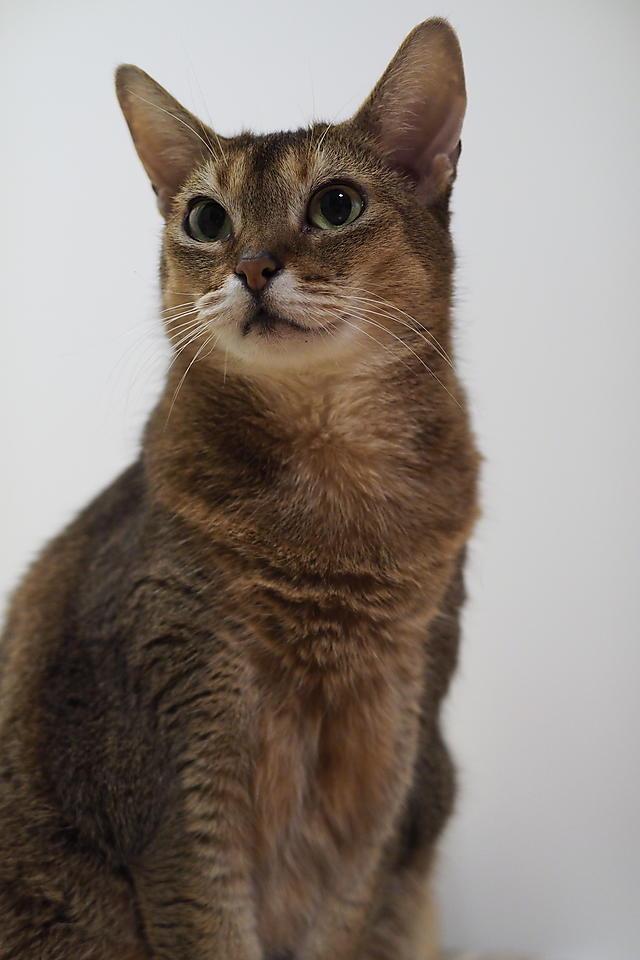 今年最初の猫さん写真