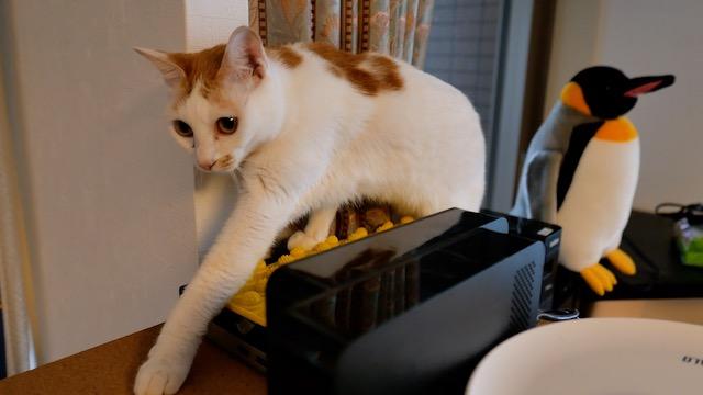猫よけを設置してみた